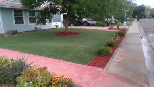 artificial grass in front yard
