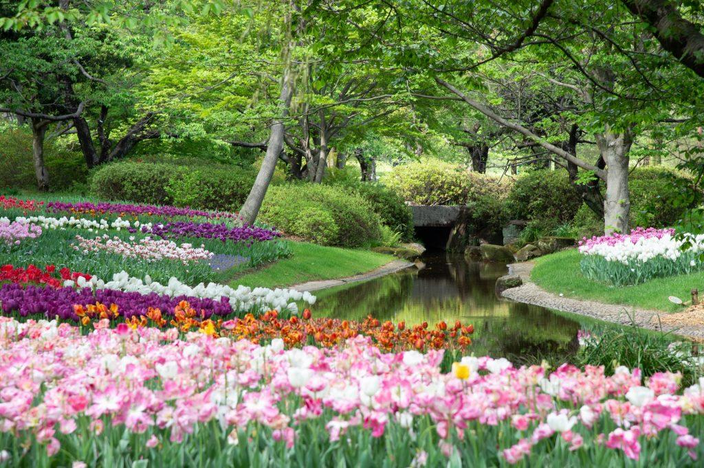 backyard plants oasis